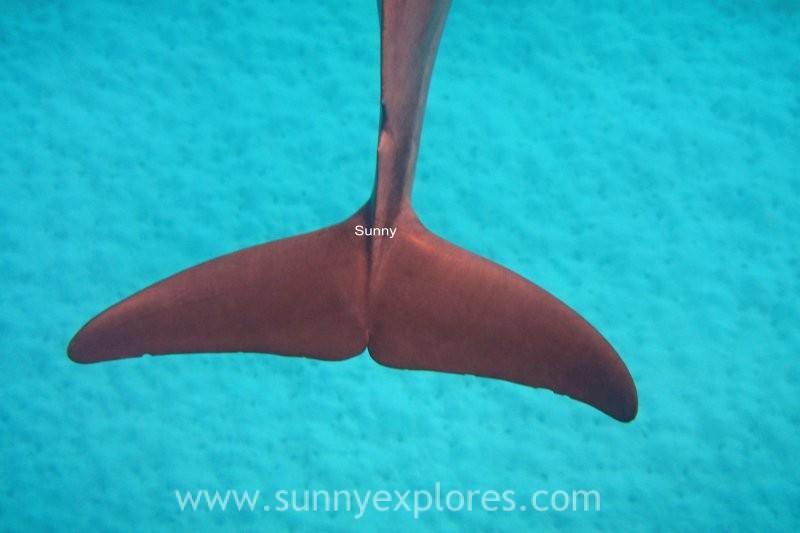 Travel inspiration: Red Sea Love