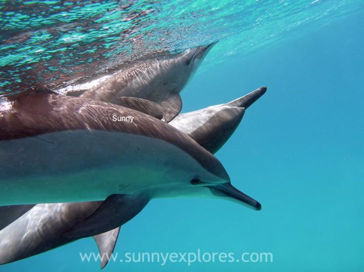 Sunnyexplores dolphins (5)