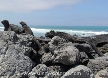 5 Islands to visit in the Galapagos Ecuador