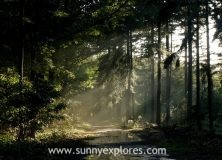 Exploring silence area Lage Vuursche Forest