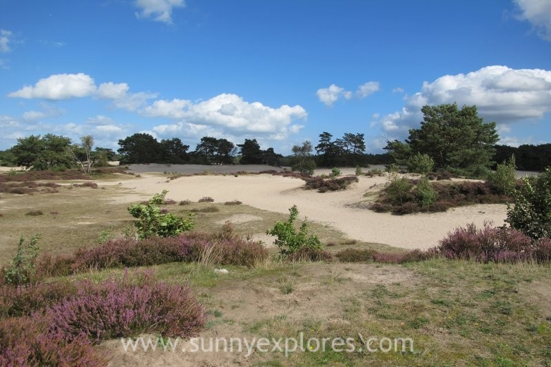 The Soesterduinen: dog walking areas in the Netherlands