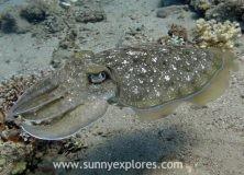Dive sites in Dahab Egypt: Bannerfish Bay