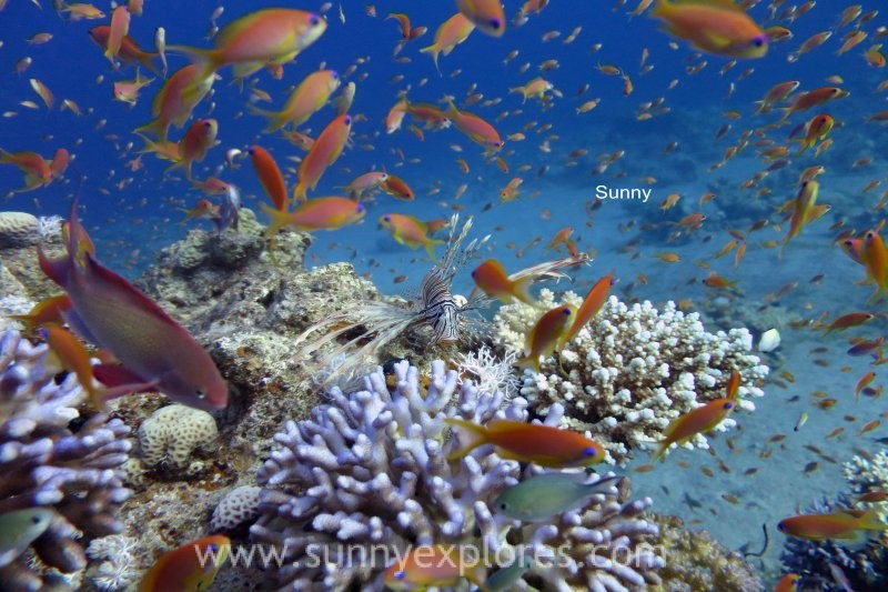 Dive sites in Dahab Egypt: Golden Blocks