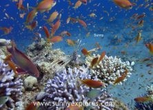 Dive sites in Dahab Egypt: Golden Blocks