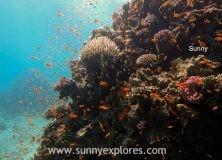 Dive sites in Dahab Egypt: Moray Garden