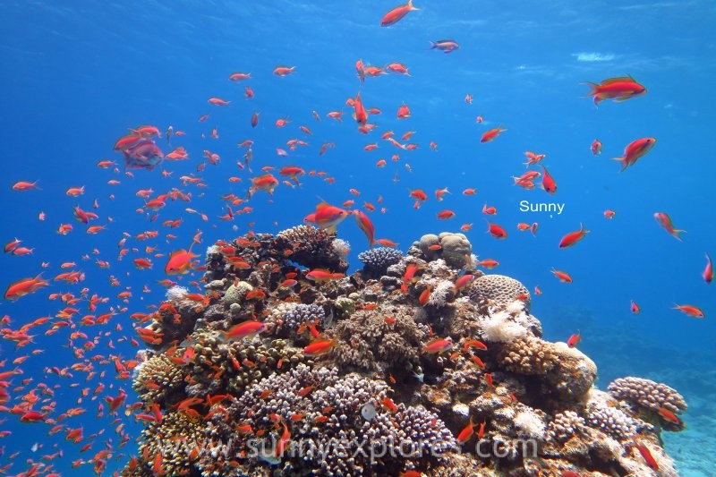 Dive sites in Dahab Egypt: Ricks Reef
