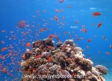 Dive sites in Dahab Egypt: Ricks Reef