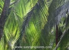 Pura Vida: palm trees in Costa Rica