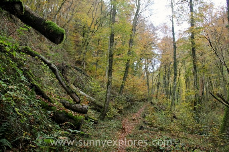Visiting the Müllerthal in Luxembourg in autumn