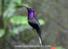 Nature in Costa Rica: brightly colored hummingbirds