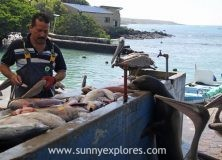 Puerto Ayora's fish market on the island Santa Cruz in the Galapagos Archipel