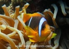 Finding Nemo in Dahab Egypt, part 2