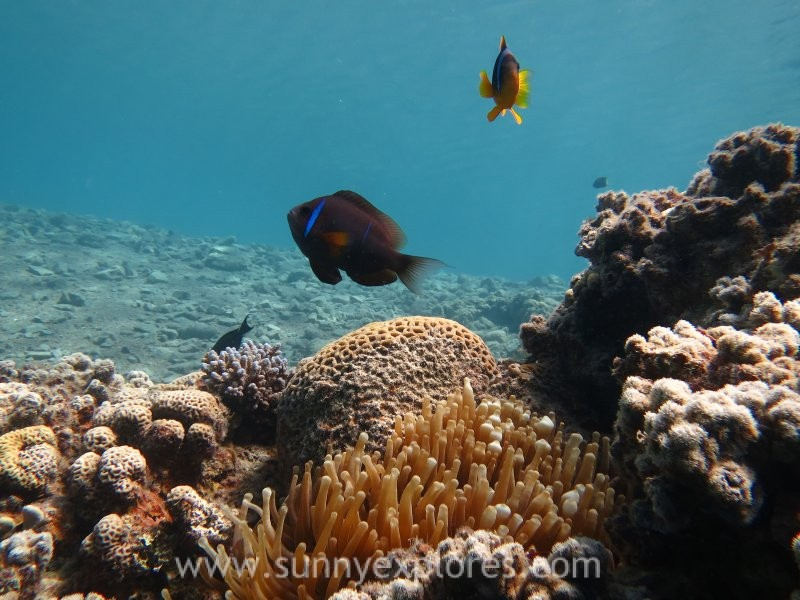 SUNNY EXPLORES » Finding Nemo in Dahab Egypt, part 2