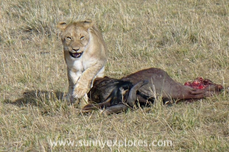 A quest for the Big Five in Kenya