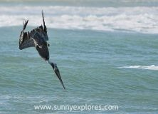 Capturing stories: the tale of the blue-footed booby
