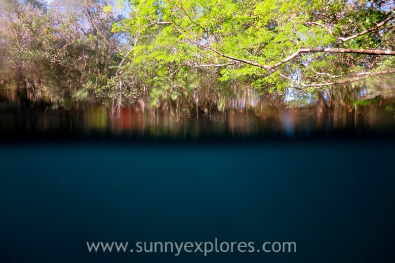 Diving the cenotes in Yucatán Mexico: Cenote Angelita