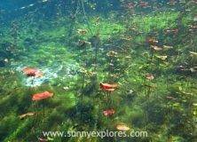 Diving the cenotes in Yucatán Mexico: Cenote Aktun Ha