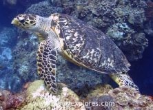 Diving in Mexico: the reefs of Cozumel